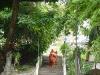 pagode-de-la-montagne-de-la-tortue-6