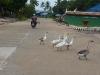De Kampot à Kep