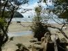 abel-tasman-track-21