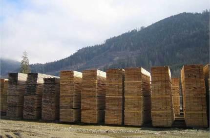 Les origines de votre abri : le séchage du bois