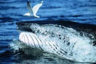 sortir de sa zone de confort Lac canada baleines