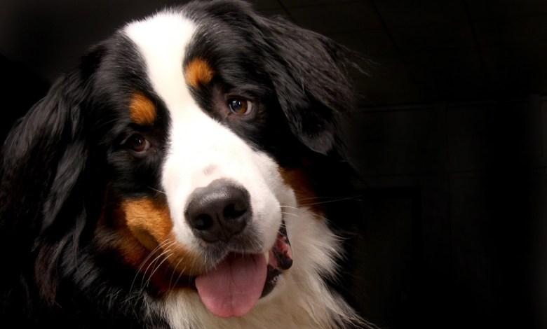Photo of Un salon international pour les amoureux des chiens à Luxexpo