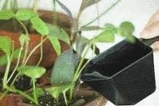 Nettoyer Et Soigner Les Plantes Dintrieur Tout Pratique
