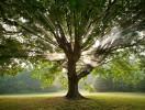 Zöld Kerület – Zöld Partnerség