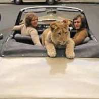 Christian the Lion's Owners Tell Their Story