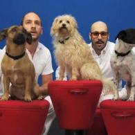 Watch: Pups Join Party in OK Go's Latest One-Shot Masterpiece