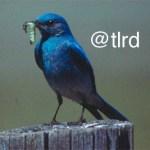 Follow Us on Twitter @TLRD