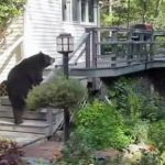How To Scare a Huge Black Bear Off Your Porch: VIDEO