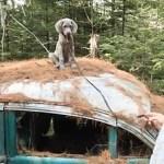 Model Dogs: VIDEO