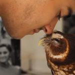 Owl Bats its Lashes: VIDEO