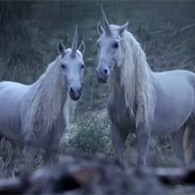 Ballsy French Ad Explains Why We Don't Have Unicorns Today: VIDEO