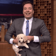 Jimmy Fallon Predicts the Winner of the 2015 Kentucky Derby with Adorable Puppies: WATCH