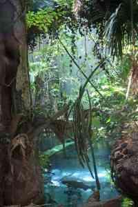 California_Academy_of_Sciences_rainforest_scene