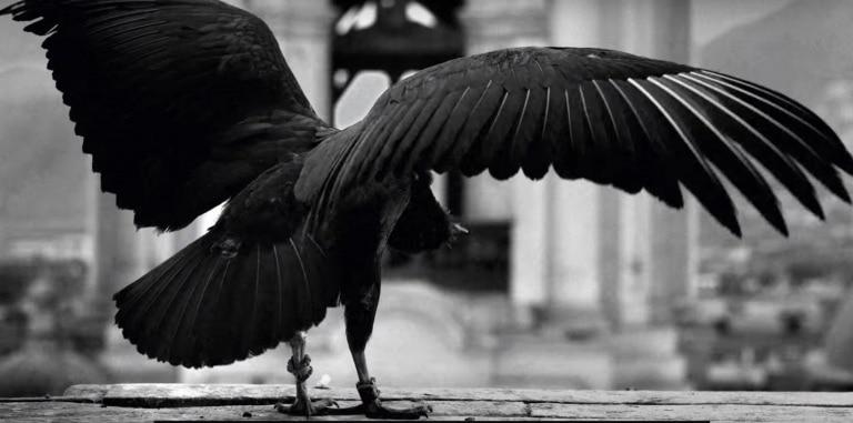 vulture1
