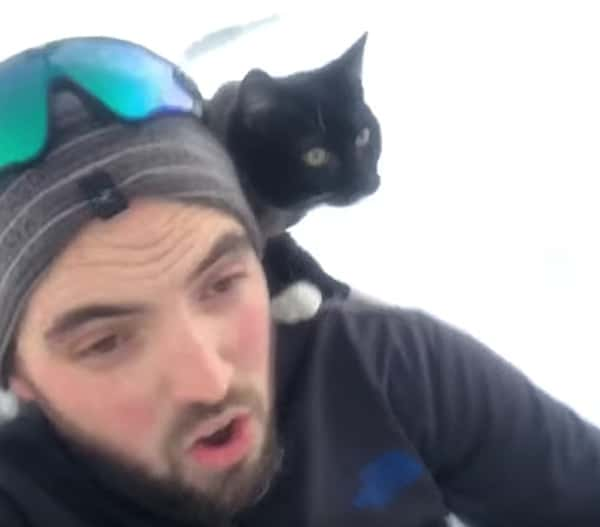 sledding cat