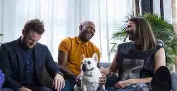 queer eye french bulldog