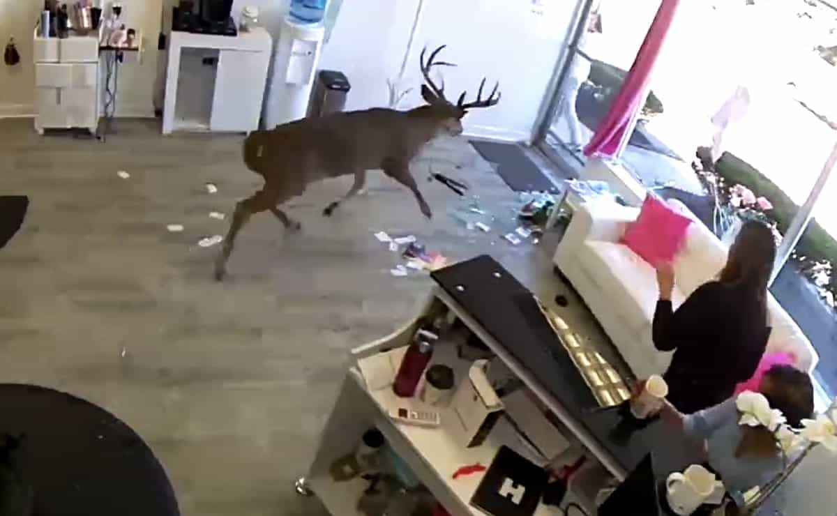 deer hair salon