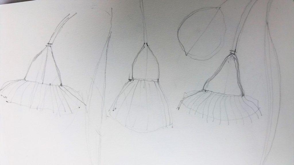 initial pencil sketch of eucalyptus