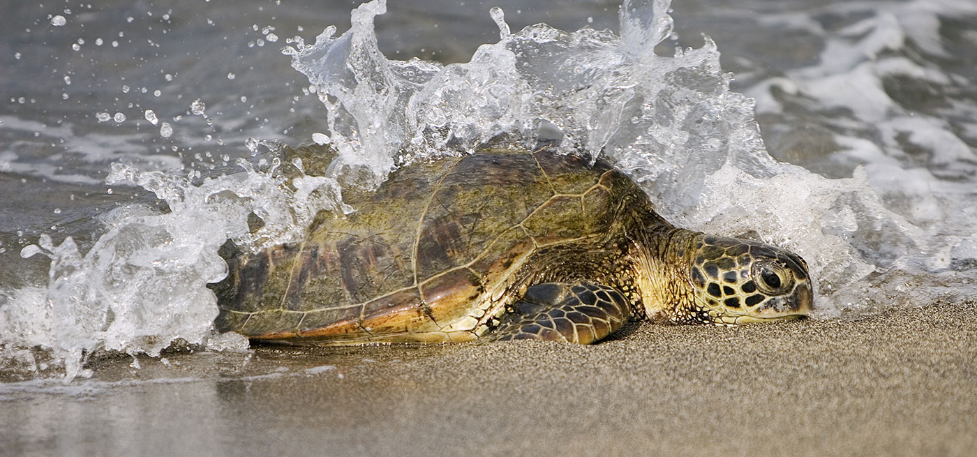Bilderesultat for 54 million year old sea turtle