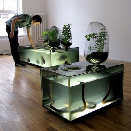 Local River Plant Aquarium