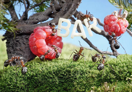Ants Bar