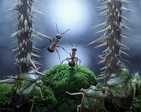 Macro Ants Photography