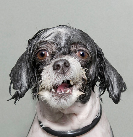 Wet Dogs Hair Styles