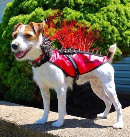 Anti Coyote Dog Vest
