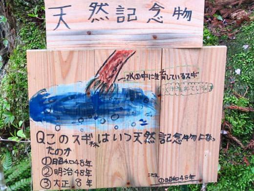 マイナスイオンのパワースポット 天然記念物 杉沢の沢スギ