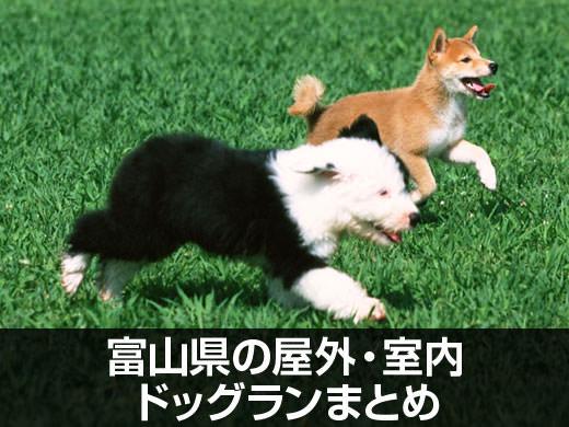 富山県の屋外・室内ドッグランまとめ