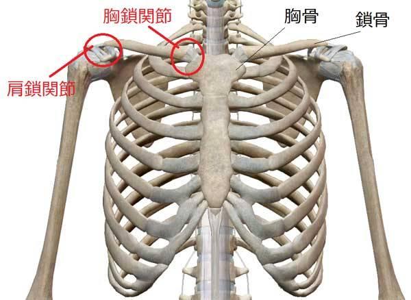 鎖骨の位置