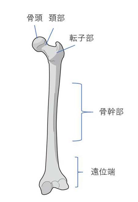 大腿骨頸部
