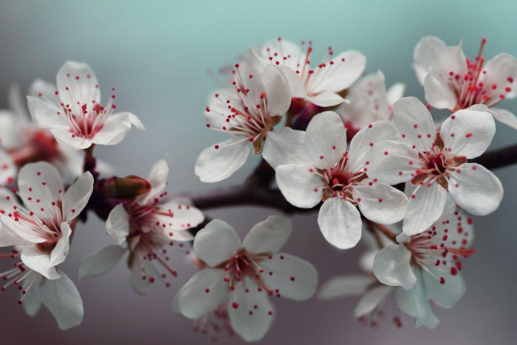 blossom LE PIANTE CHIEDONO AIUTO PIANGENDO