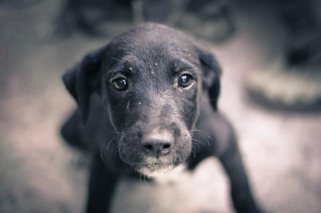 dog-245352_1280