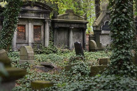 cementerio tumbas ultratumba LAS HABAS: UNA PLANTA AMBIVALENTE
