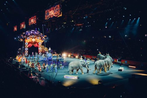 HOLOGRAMS: MAGIC IN THE CIRCUS