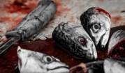 pesce morto sangue testa pesci