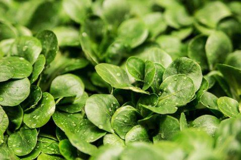 ensalada verde vitaminas saludable ¿EN QUÉ CONSISTE LA DIETA VEGANA?