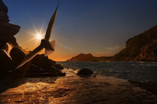 volar pájaro anochecer libertad