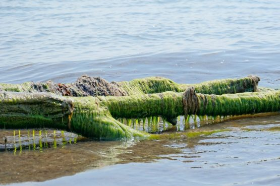 alghe marine oceano  vitamine