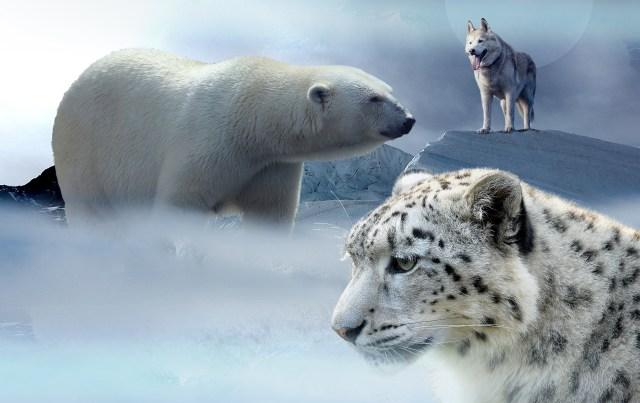 naturaleza animales ecosistemas extinción cambio climático clima  SOS TIERRA