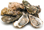 oysters - Copyright – Stock Photo / Register Mark
