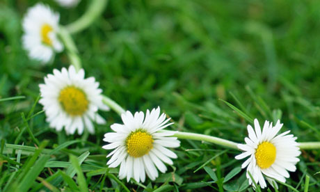 Daisy Chains! - toys, games, puzzles, creative play - Toy Shop ...
