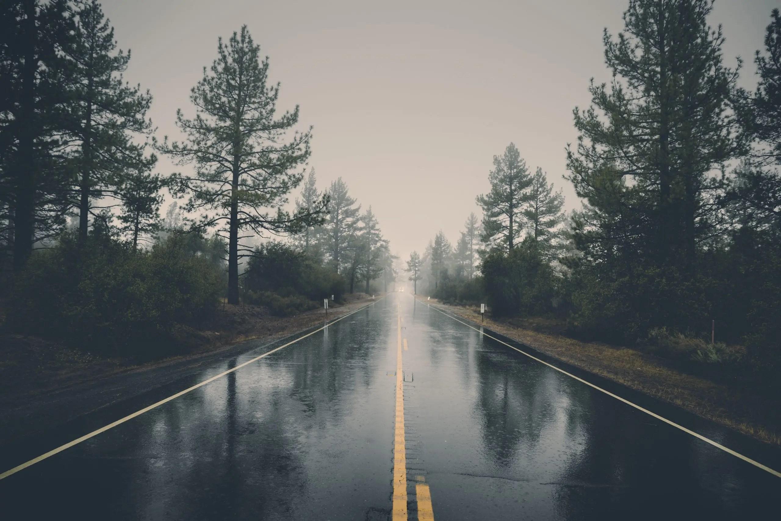road-landscape-nature-forest-39811