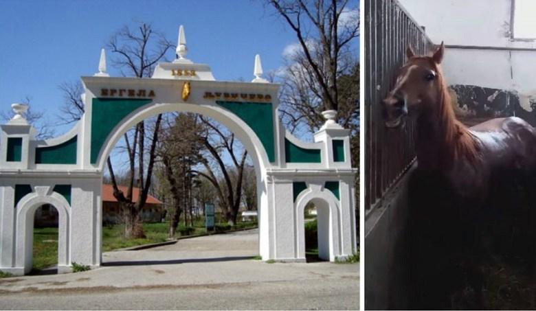 """Photo of U ergeli """"Ljubičevo"""" uginuo još jedan konj"""