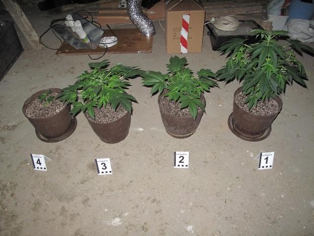 Photo of KRIVIČNA PRIJAVA: U Malo Crniće policija pronašla preko 1,1 kg marihuane!