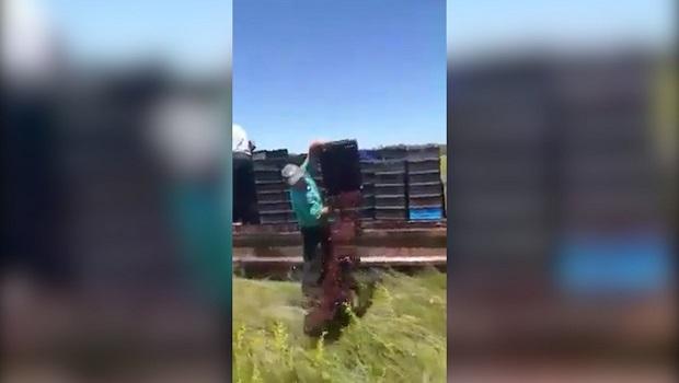 Photo of PIŠE RANKO PIVLJANIN: Otkup višnje đubri njive u Požarevcu (VIDEO)