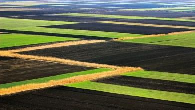 Photo of BESPLATNE NJIVE: Požarevac besplatno ustupa na korišćenje poljoprivredno zemljište