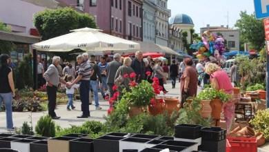 Photo of OSMOMARTOVSKA ULIČNA PRODAJA: Počela podela prodajnih mesta na trgu u Velikom Gradištu