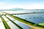 Ibox Energy construye un parque solar en Posadas que operará en seis meses